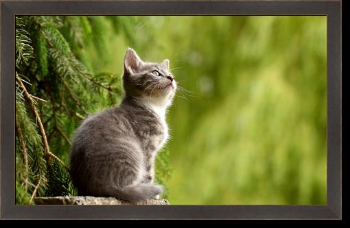 Zdjęcie kota w szerokiej ciemnej ramce.